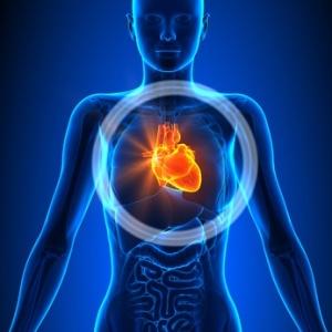 Heart - Female Organs - Human Anatomy